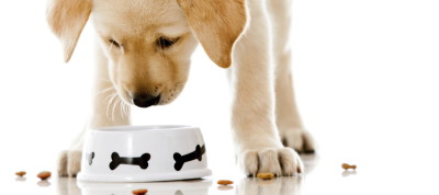 The health benefits of choosing your dog food wisely
