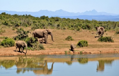 African Adventures: Tips and Tricks For Travelling The Continent