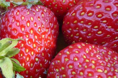 Growing Your Own Colourful and Delicious Summer Fruits