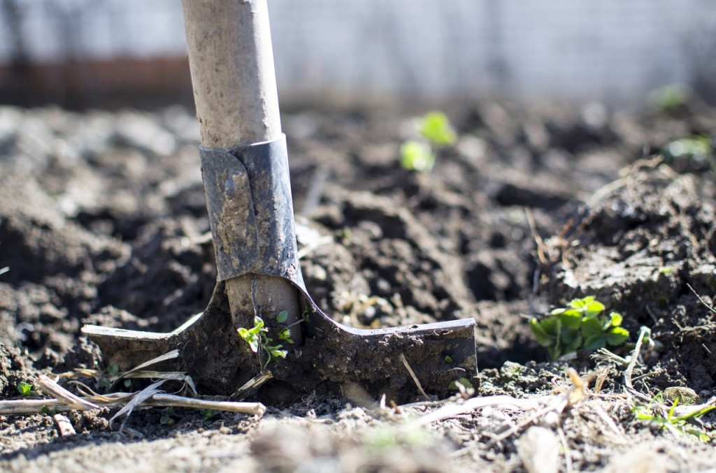 The Pick Of The Crop! Growing Your Own Garden