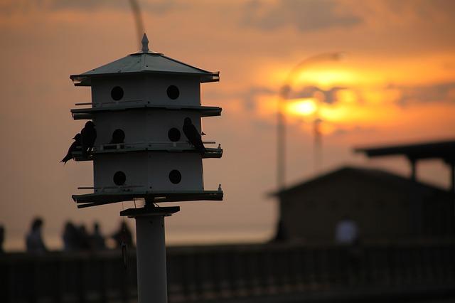 bird-house-325964_640