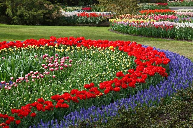 tulips-21947_640